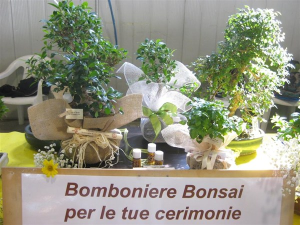 Regalo bonsai Fiera