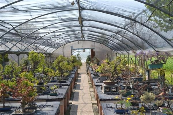 Le nostre bomboniere bonsai sono meravigliose idee regalo for Bonsai da esterno